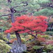 Japanese autumn garden — Stock Photo