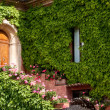 Stock Photo: Wooden door and ivy