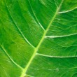 Green leaf — Stock Photo #3685791