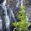 Tree on waterfall background - Stock Photo