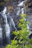 Träd på vattenfall bakgrund — Stockfoto