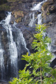 Tree on waterfall background — Stok fotoğraf