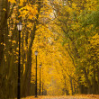 Autumn park — Stock Photo #3750987