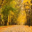 Autumn park - Stockfoto