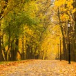 Autumn park - 