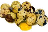Eggs quail — Stock Photo