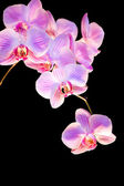 Orchideen — Stock Photo