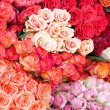 Giant Roses Bouquet — Stock Photo