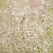 Grass in blur background. — Stock Photo