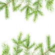 Green fir branches .close up — Stock Photo #2924087