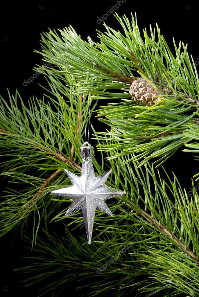 Cristmas star in frame   branches  the pine — Stock Photo #2925149