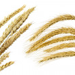 Collection of wheat ears — Stock Photo #2937161