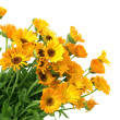Fresh bouquet of calendula — Stock Photo