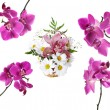 Collection of pink beautiful orchid — Stock Photo