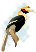 Hornbill — Stock Vector