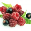 Ripe raspberry and  black currant — Stock Photo