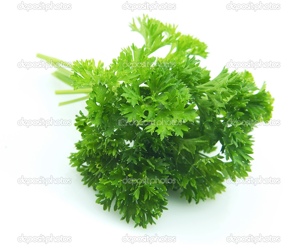 Curly parsley — Stock Photo © margo555 #3648324