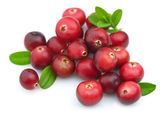 Ripe cranberry — Stock Photo