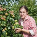 Girl picking apples — Stock Photo #2719828