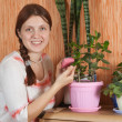 Royalty-Free Stock Photo: Woman cleaning flowers in the pot