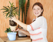 Woman repotting Pachypodium cactus — Stock Photo