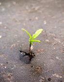 Growing green sprout in asphalt — Stock Photo
