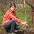 Stock Photo: Womresetting tree sprouts