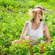 Woman at field of potato — Stock Photo