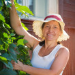 Woman  with  virginia creeper — Stock Photo