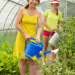 Women watering  with  watering pot - Stock Photo