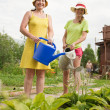 Women watering vegetables - Stock Photo