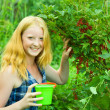 Girl is picking red currant — Stock Photo #3585902