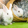 Stock Photo: White rabbits in basket