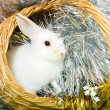 Rabbit in basket — Stock Photo