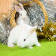 Foto Stock: White rabbits in basket