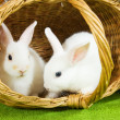 Stock Photo: White rabbits in baske