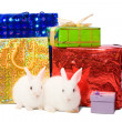 White rabbits with gifts — Stock Photo