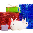 Stock Photo: Rabbits with gifts