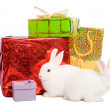 Rabbits with gifts — Stock Photo