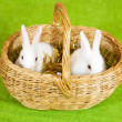 Royalty-Free Stock Photo: Two  rabbits in basket