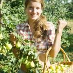 Teen girl picking peares — Stock Photo