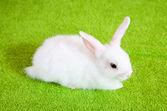 Little white rabbit — Stock Photo