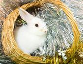 在篮子里的兔子 — 图库照片
