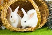 White rabbits in baske — Stock Photo