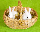 Two rabbits in basket — Stock Photo