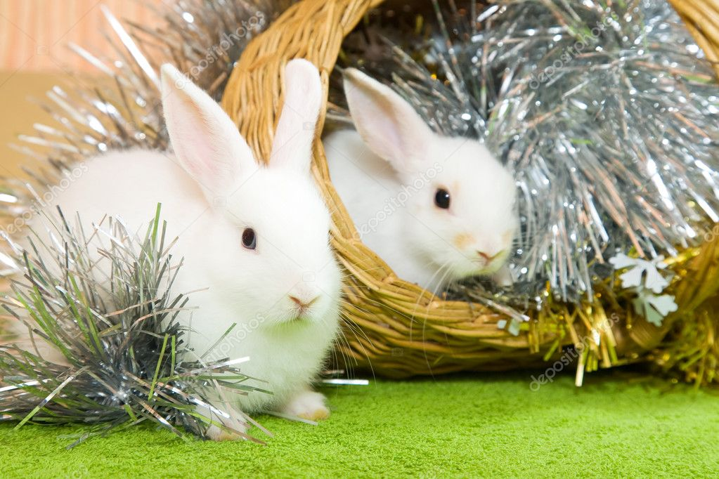 Two white rabbits in basket against trumpery on green — Stock Photo #3814502