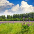 Stock Photo: Summer landscape