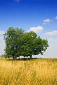 Landscape with two trees — Stock Photo