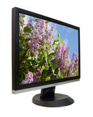 Lcd monitor with lilac — Stock Photo