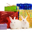 Two white rabbits with gifts - Stock Photo